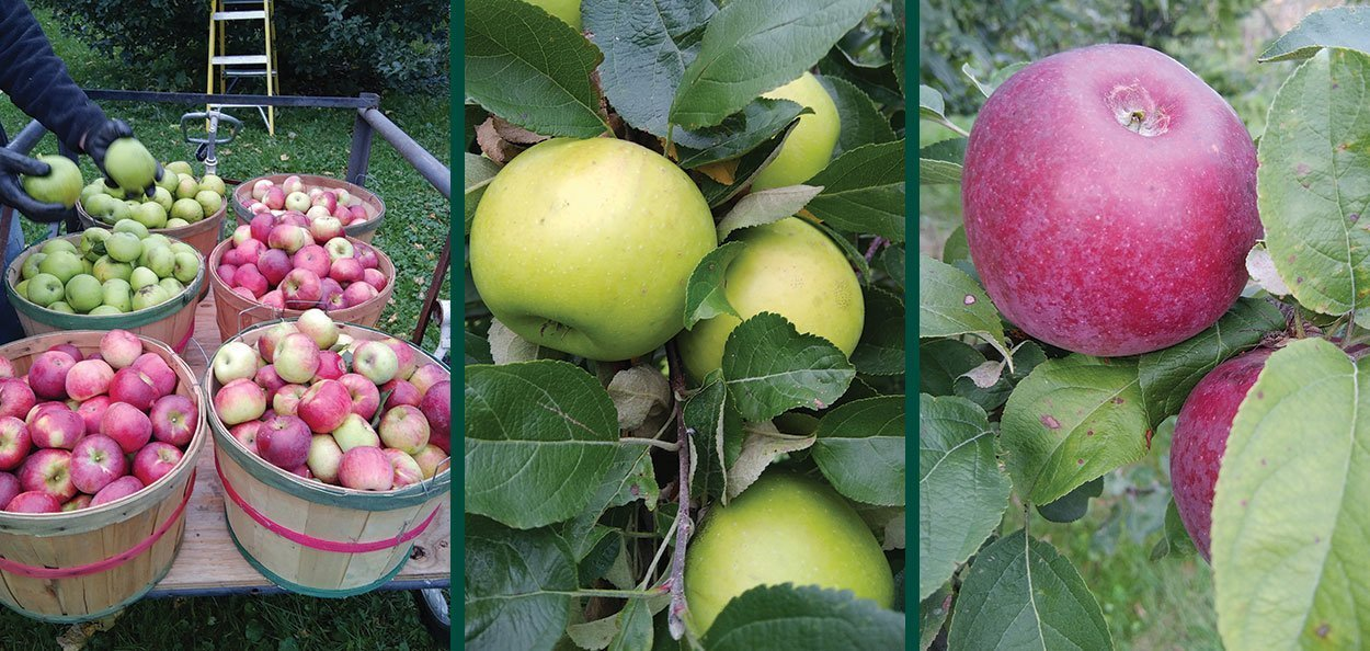 best pesticides for the home orchardist insecticide fungicide spray apple trees