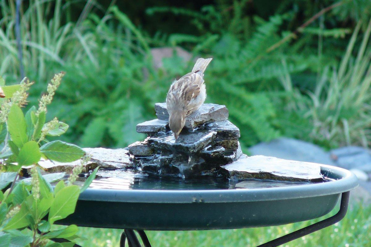 birds drinking from a water fountain in your wisconsin bird garden