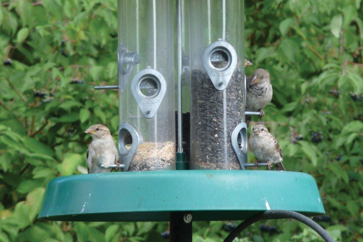 birds eating from bird feeder with seeds in your wisconsin bird garden