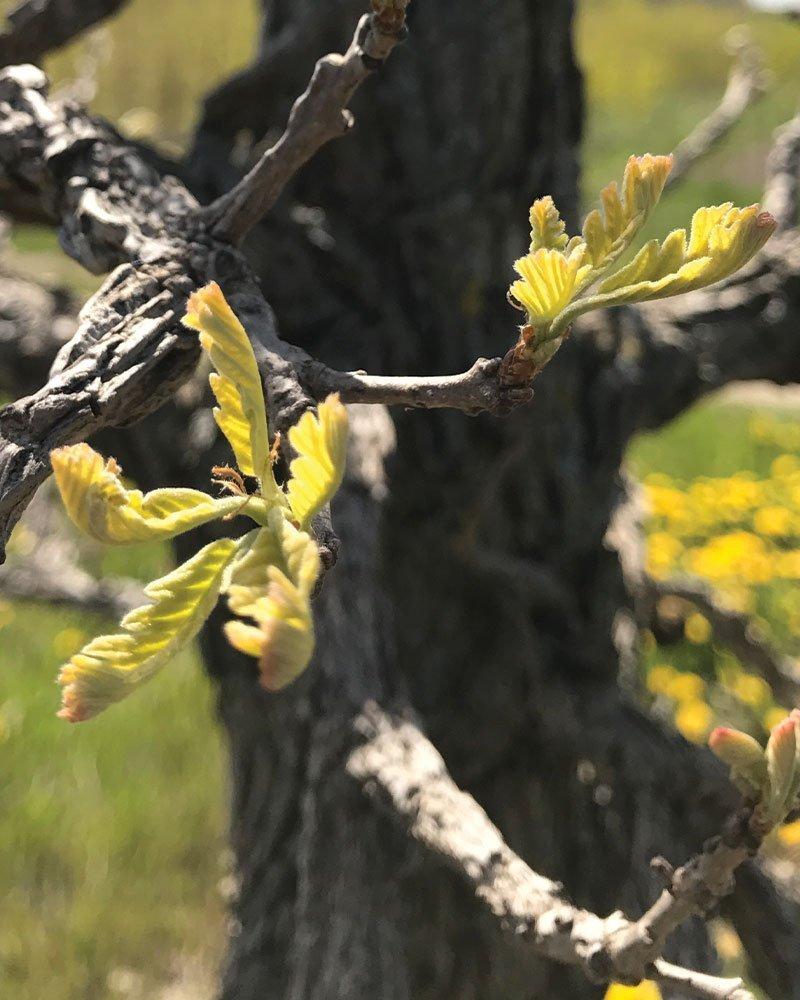 infinity oak april fun joke 2020 ftimg