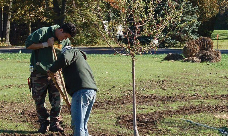 plant guides planting watering pruning trees shrubs evergreens johnson's nursery menomonee falls wisconsin ftimg