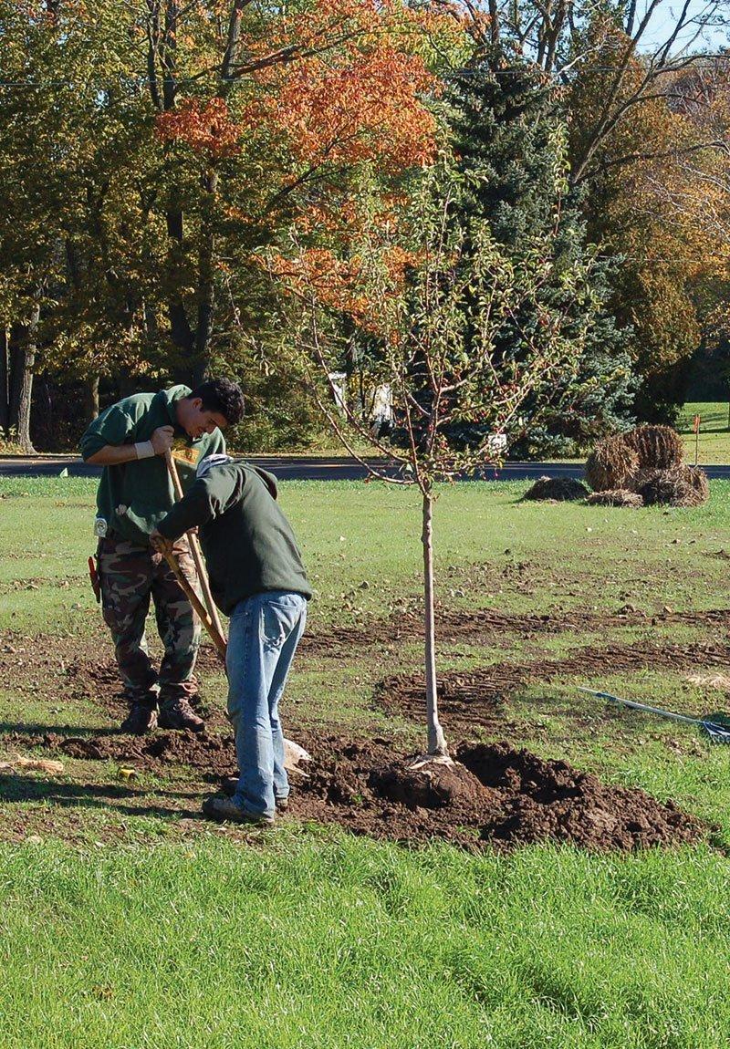 plant guides planting watering pruning trees shrubs evergreens johnson's nursery menomonee falls wisconsin ftimg
