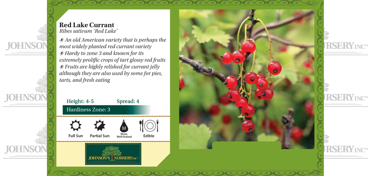 Red Lake Currant Ribes sativum 'Red Lake' benchcard