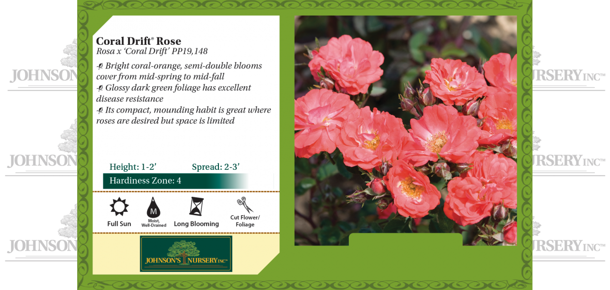 Coral Drift® Rose Rosa x 'Coral Drift' PP19,148 benchcard
