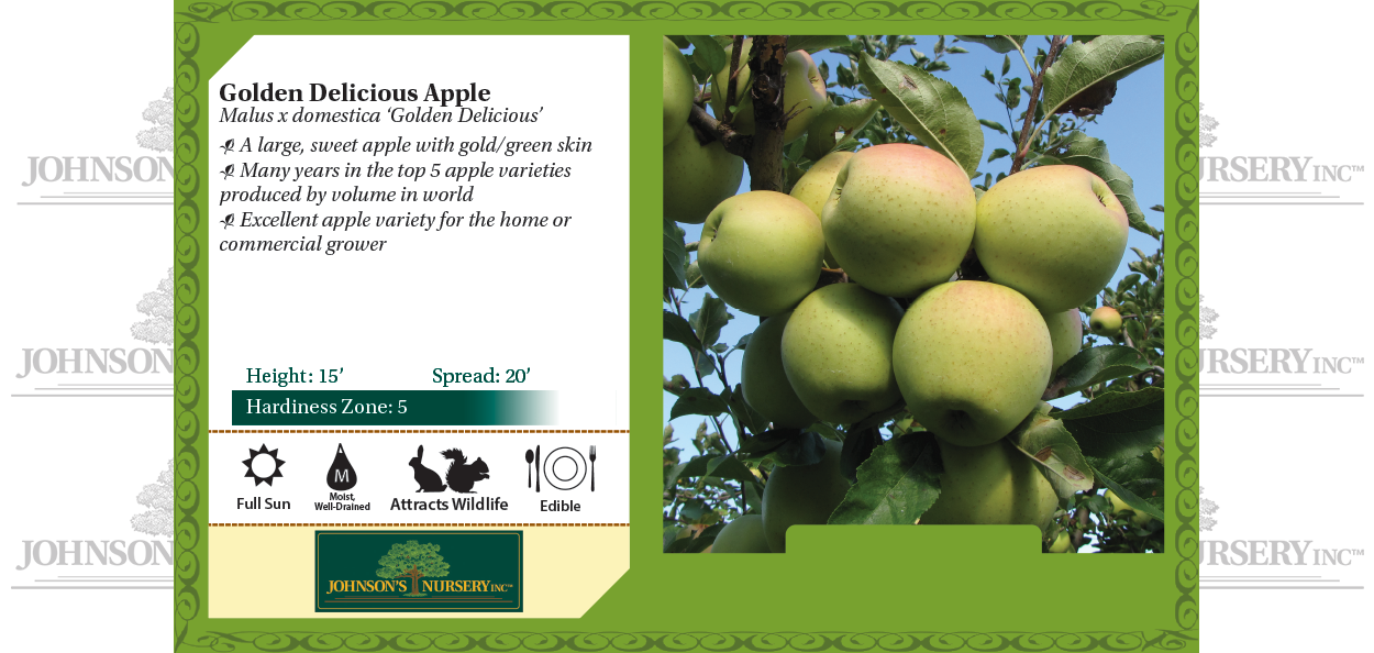 Golden Delicious apple Malus x domestica 'Golden Delicious' benchcard