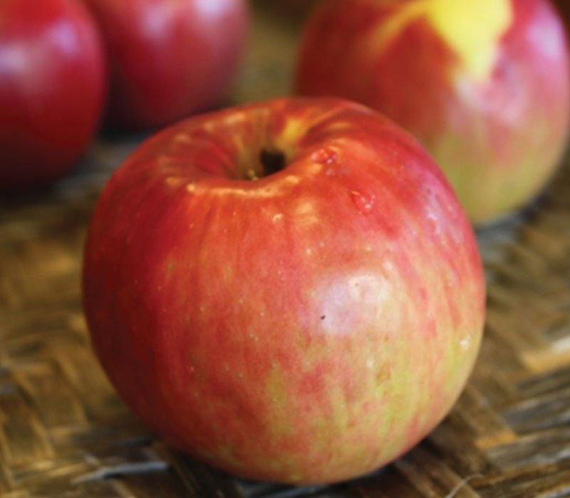 jonathan apple malus domestica ftimg2