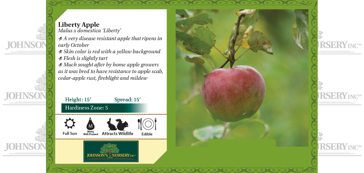 Liberty apple Malus x domestica 'Liberty' benchcard