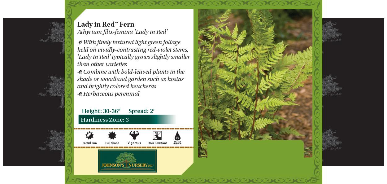 lady in red fern athyrium filix-femina benchcard