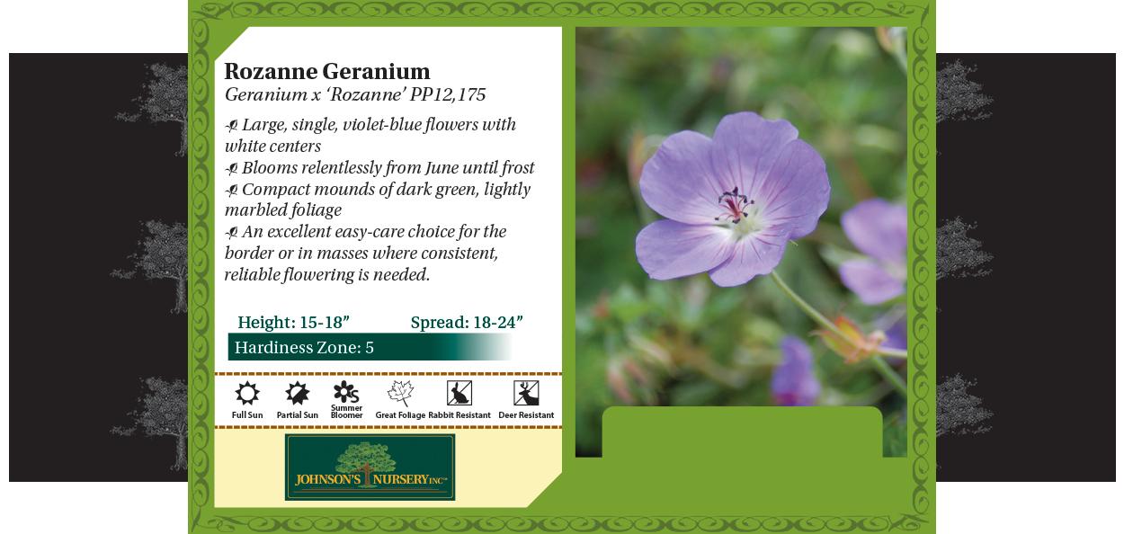 rozanne geranium wisconsin nursery perennial summer long bloom johnson's nursery