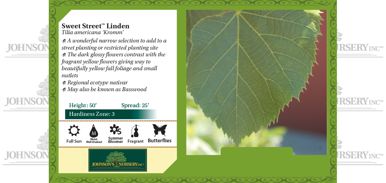 sweet street linden tilia americana kromm benchcard