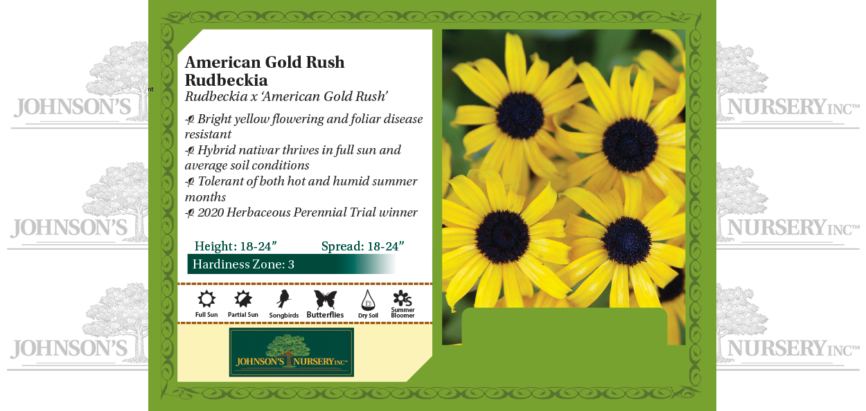 american gold rush rudbeckia johnson's nursery black eyed susan benchcard