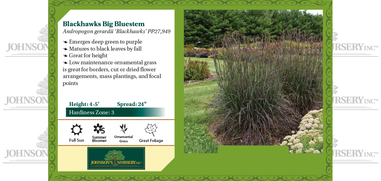blackhawks big bluestem andropogon gerardii benchcard