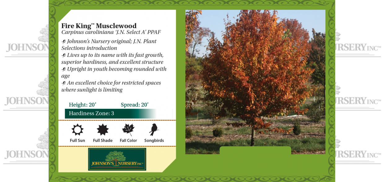 Fire King™ Musclewood Carpinus caroliniana 'JN Select A' PPAF benchcard