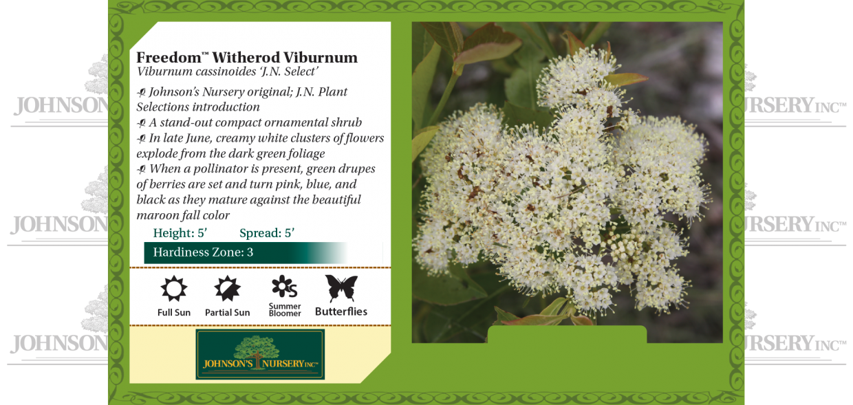 Freedom™ Witherod Viburnum Viburnum cassinoides 'J.N. Select' benchcard