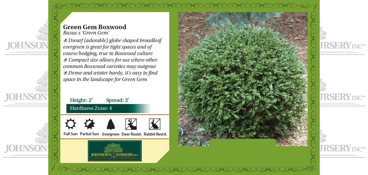 green gem boxwood buxus broadleaf evergreens wisconsin benchcard