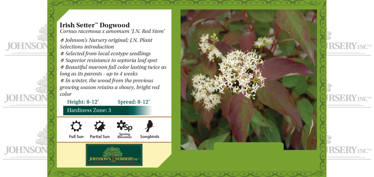 Irish Setter™ Dogwood Cornus racemosa x amomum 'J.N. Red Stem' benchcard