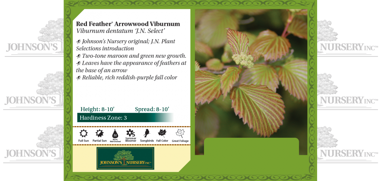 Red Feather® Arrowwood Viburnum Viburnum dentatum 'J.N. Select' benchcard
