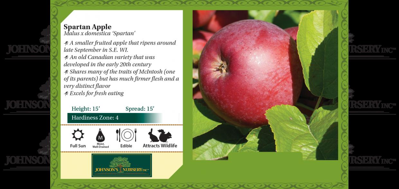 Spartan Apple Malus x domestica 'Spartan' benchcard