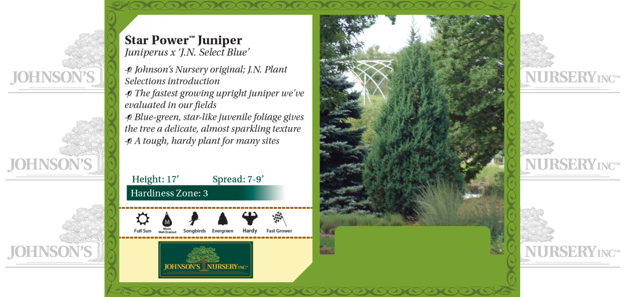 Star Power™ Juniper Juniperus x 'J.N. Select Blue' benchcard