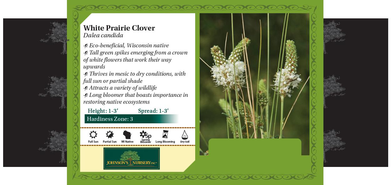 white prairie clover dalea candida johnson's nursery plants native wisconsin benchcard