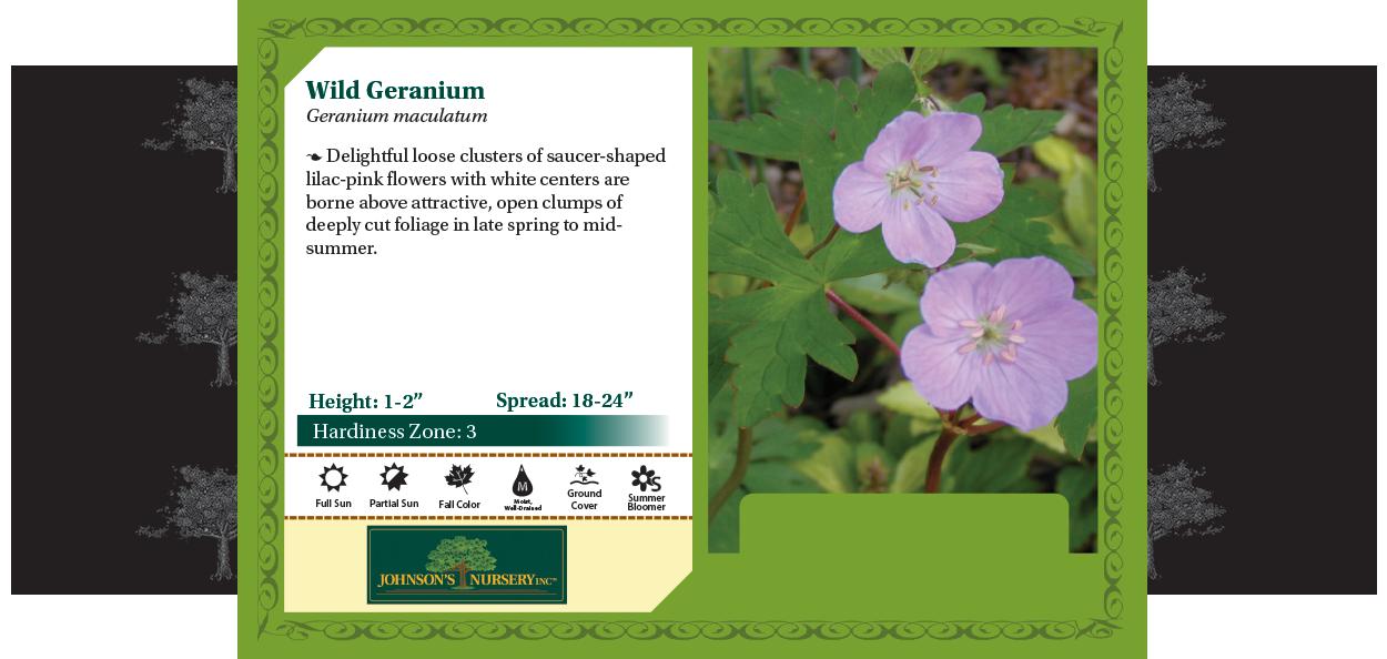 Wild Geranium, Spotted Geranium, Cranesbill Geranium maculatum benchcard