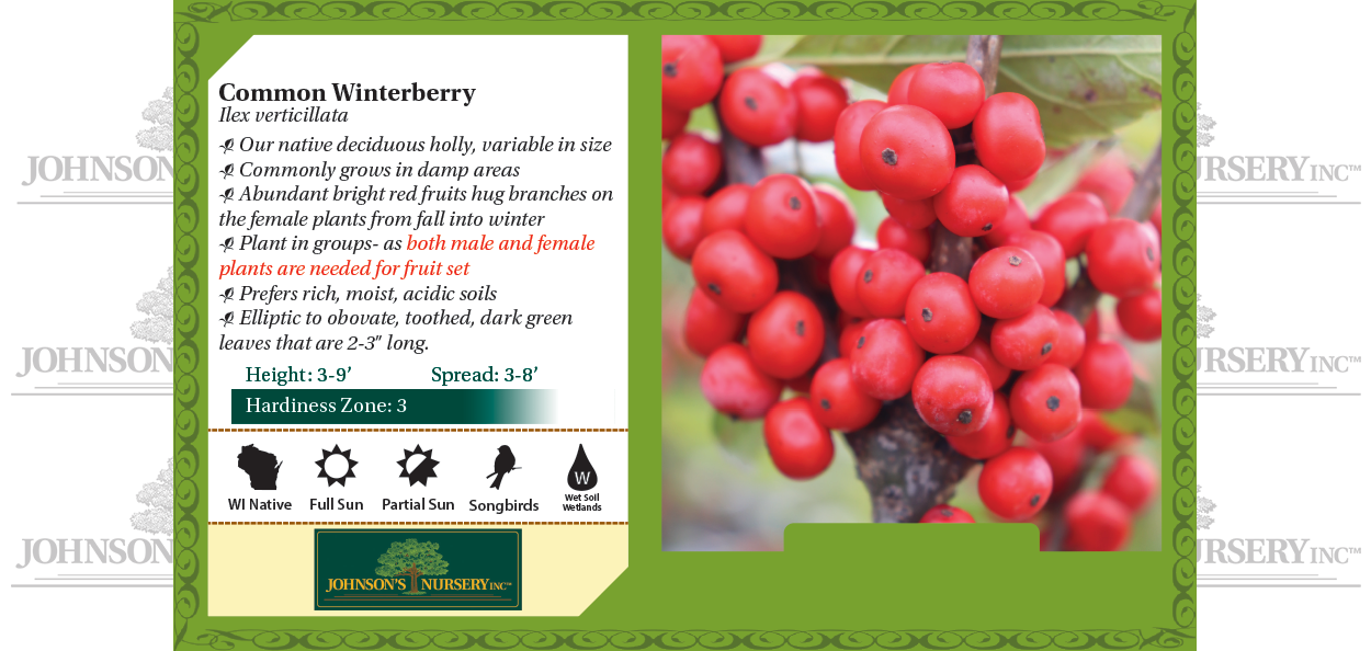 common winterberry ilex verticillata wisconsin native restoration landscape shrub benchcard
