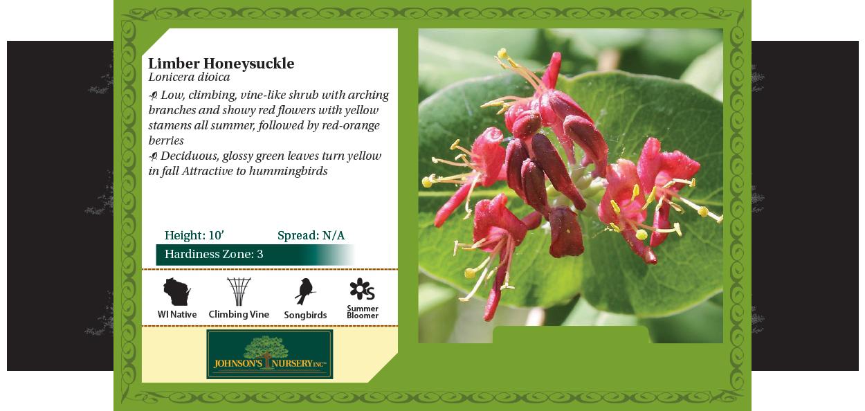 limber honeysuckle lonicera dioica wisconsin native vines at johnson's nursery benchcard