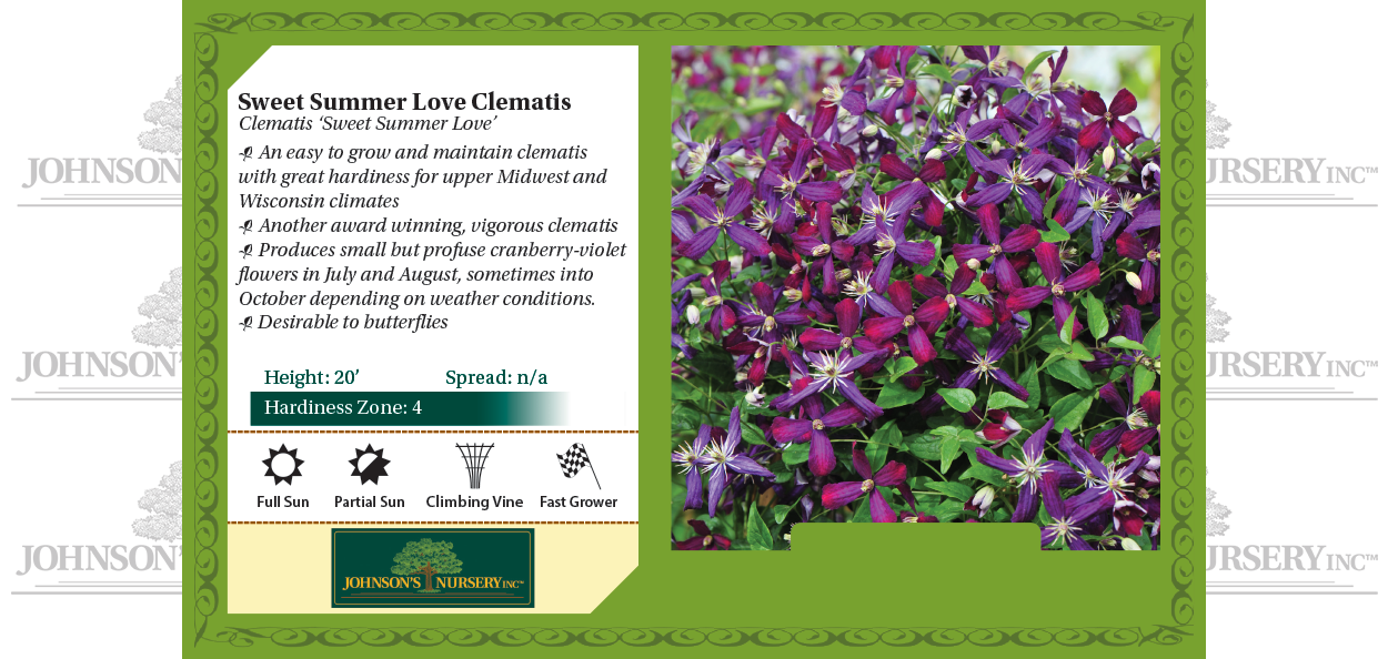 sweet summer love clematis vines at johnson's nursery benchcard