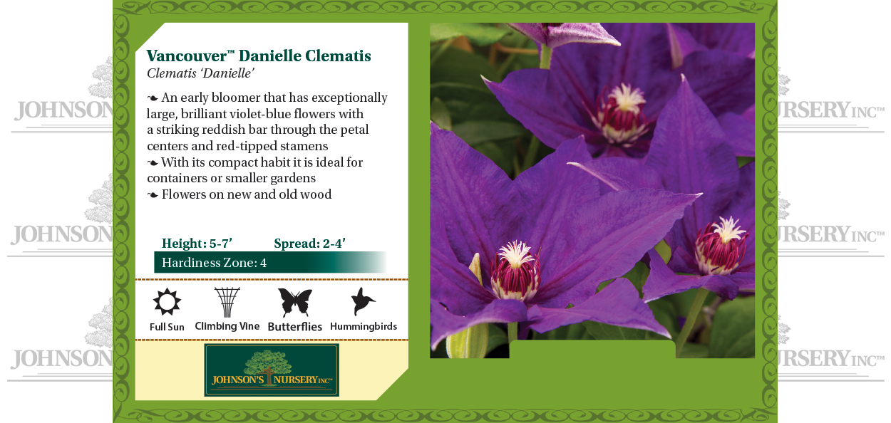 vancouver danielle clematis at johnson's nursery benchcard