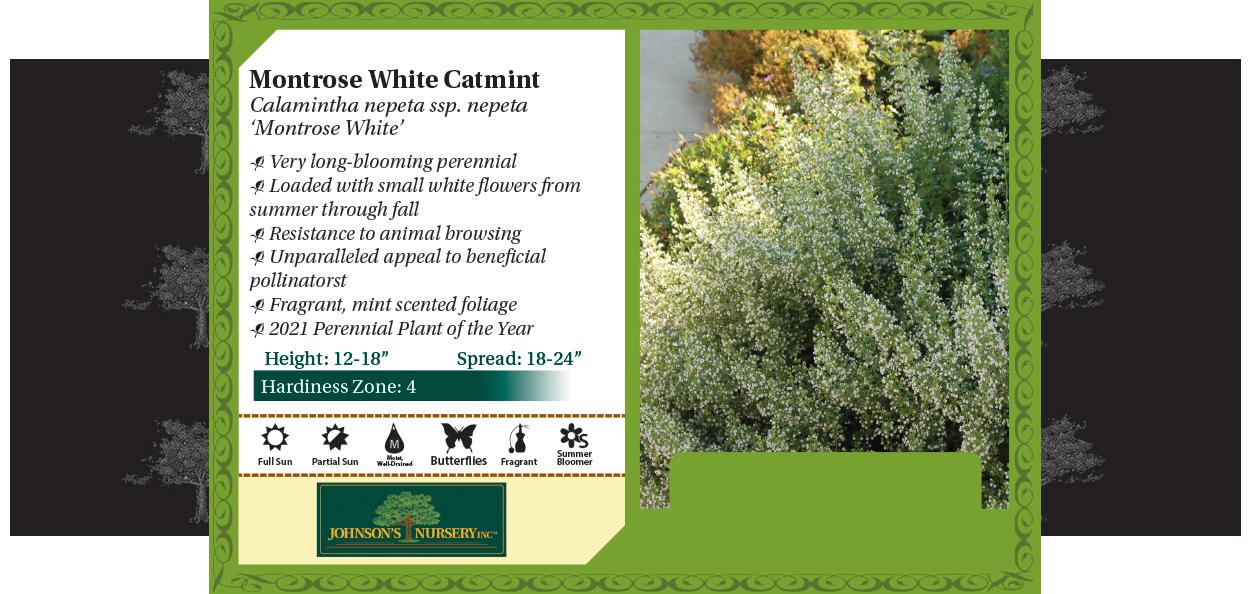 montrose white calamint calamintha nepeta at johnson's nursery menomonee falls benchcard