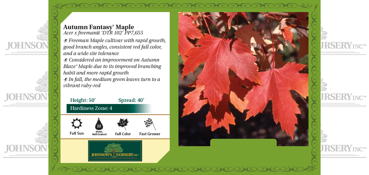 autumn fantasy maple acer freemanii fall red fall color tree benchcard