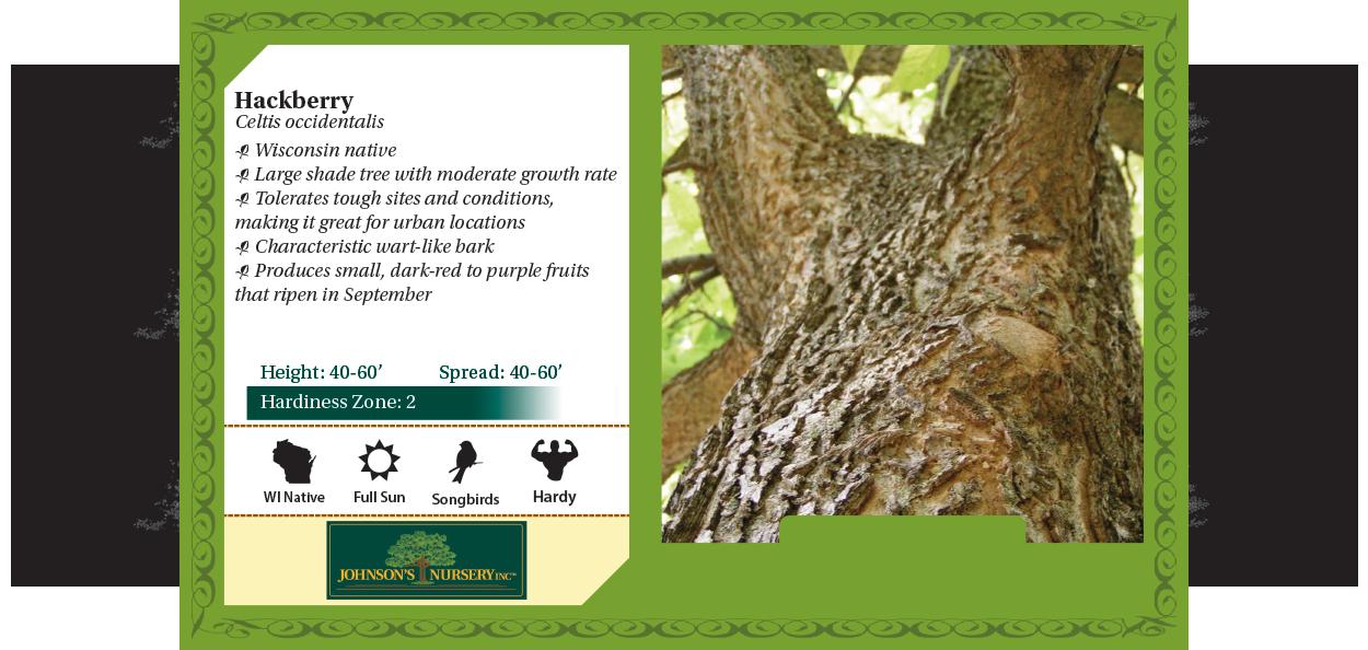 common hackberry celtis occidentalis benchcard