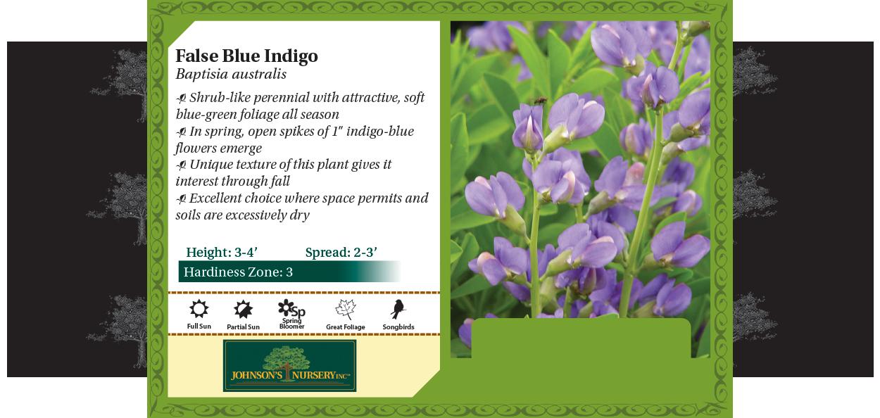 False Blue Indigo, Blue Wild Indigo, WIld Blue Indigo, Rattlepod Baptisia australis benchcard