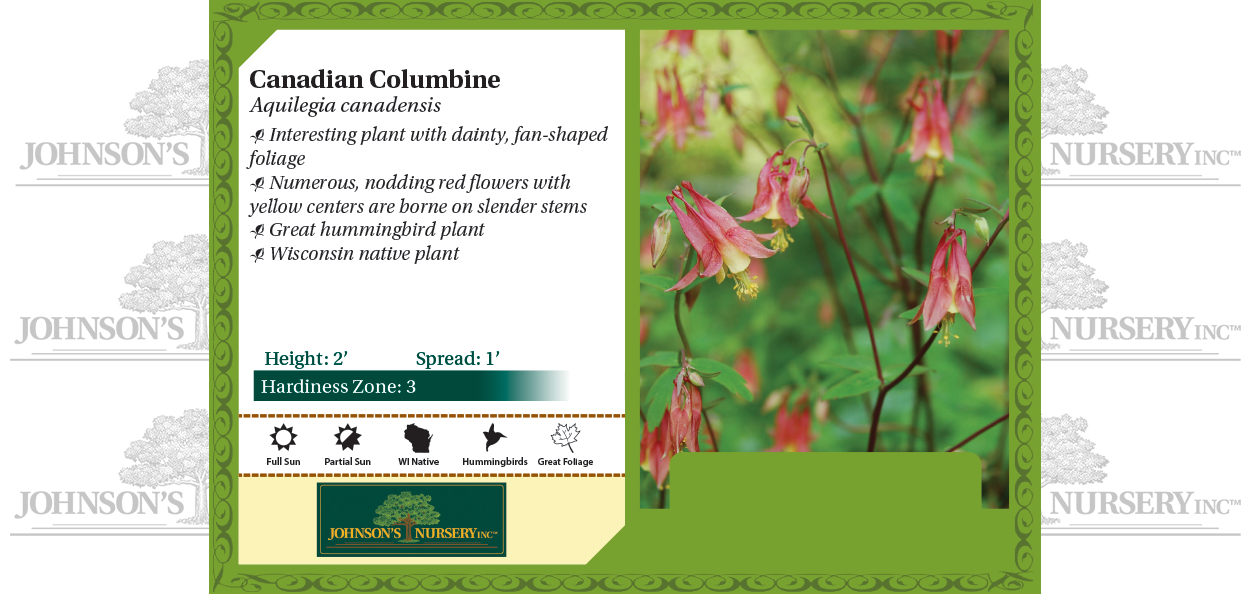 Wild Columbine, Eastern Red Columbine, Meeting-Houses Aquilegia canadensis benchcard