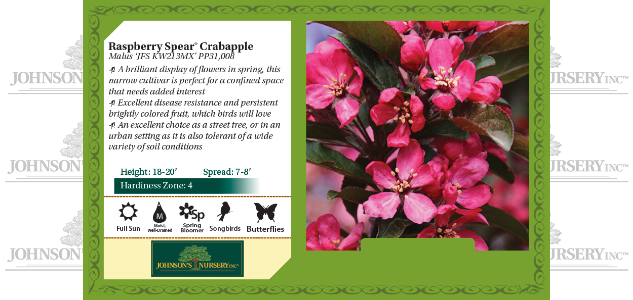 Raspberry Spear® Crabapple Malus 'JFS KW213MX' PP31,008 benchcard