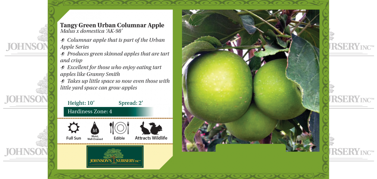 Tangy Green Urban Columnar apple Malus x domestica 'ak-98' benchcard
