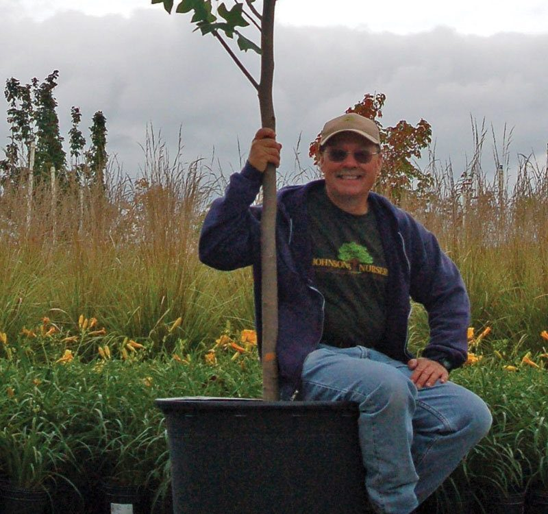 understanding nursery stock sizes container grown trees paul ftimg
