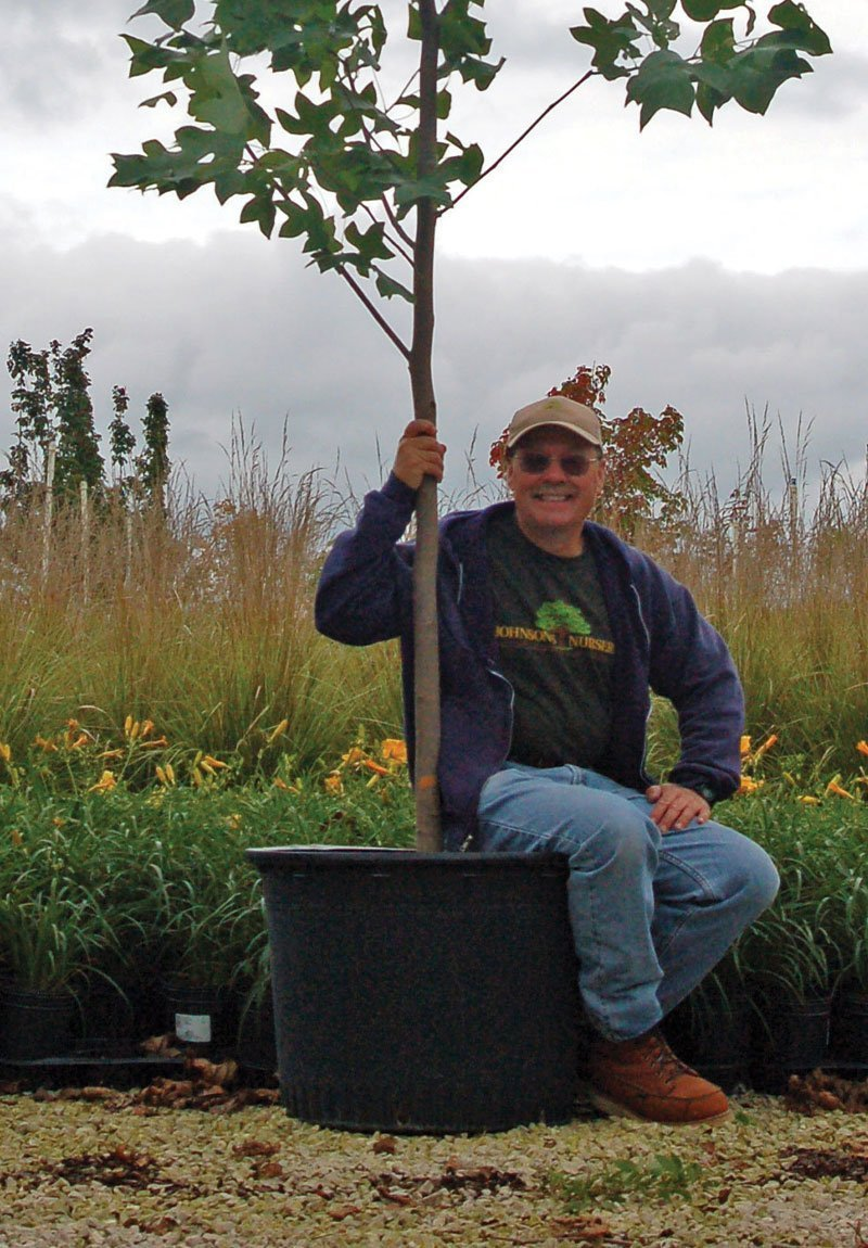 understanding nursery stock sizes container grown trees paul ftimg
