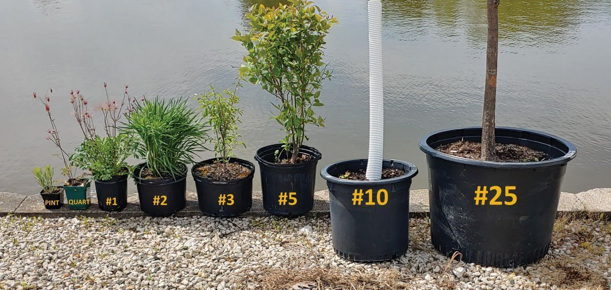 understanding nursery stock sizes plant containers in a row