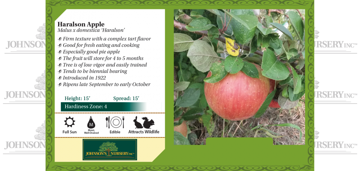 haralson apple malus domestica benchcard