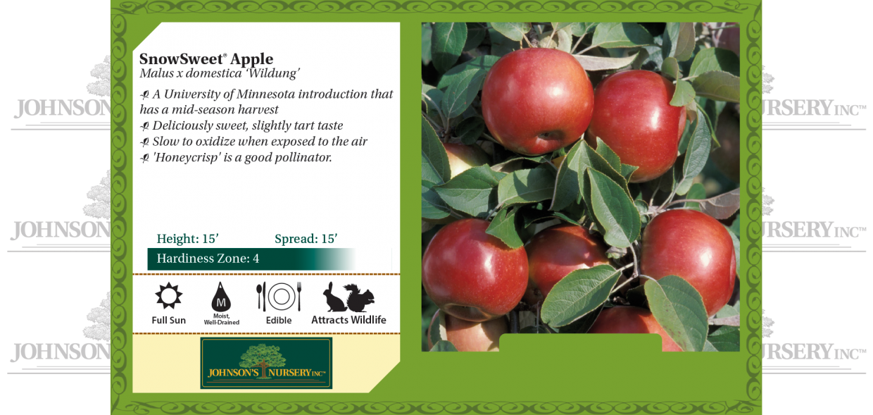 snowsweet apple malus domestica wildung benchcard