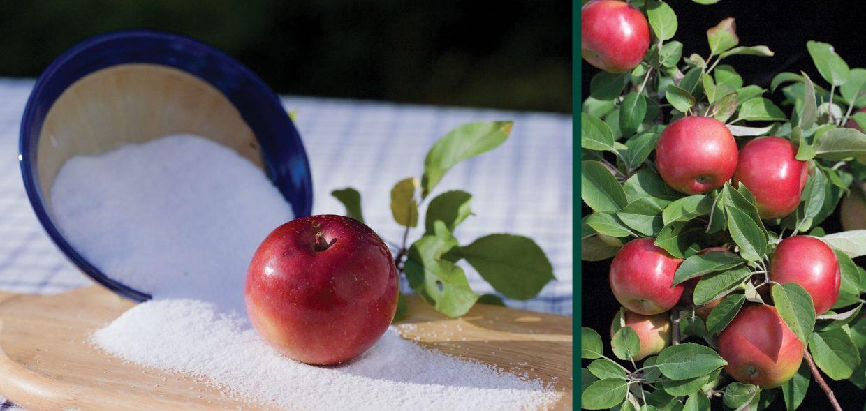 snowsweet apple malus domestica wildung