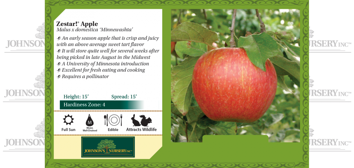 zestar apple malus domestica minnewashta benchcard