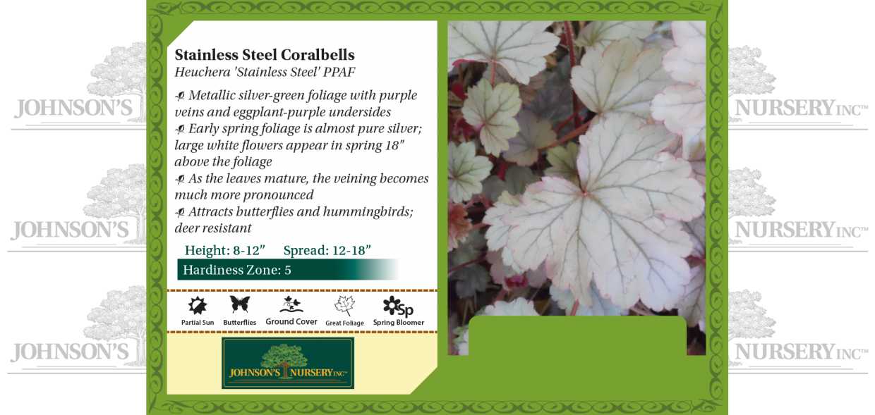 Stainless Steel Coralbells Heuchera 'Stainless Steel' PP23,349 benchcard