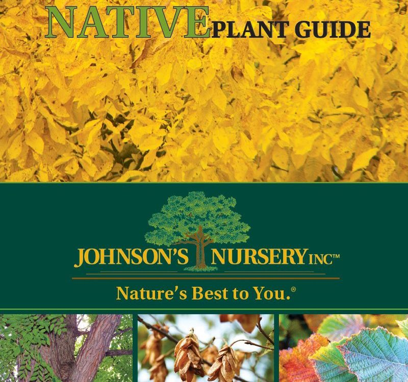 wisconsin-native-plant-guide