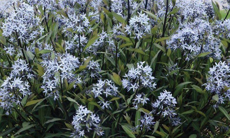 spring-plant-draft-pics-ftimg