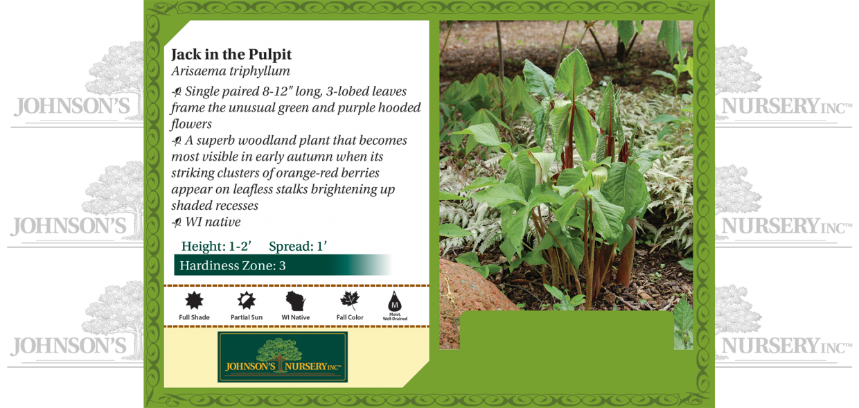 Arisaema triphyllum jack in the pulpit wisconsin benchcard