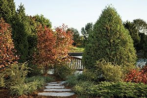 technito arborvitae thuja occidentalis bail john catalog