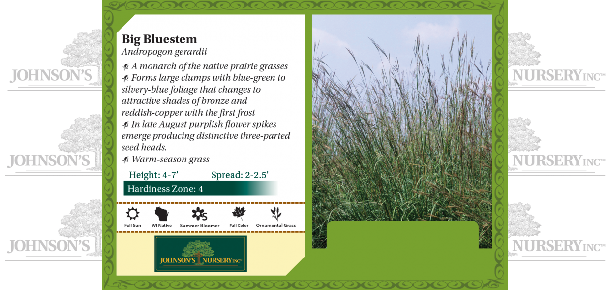 big bluestem andropogon gerardii benchcard