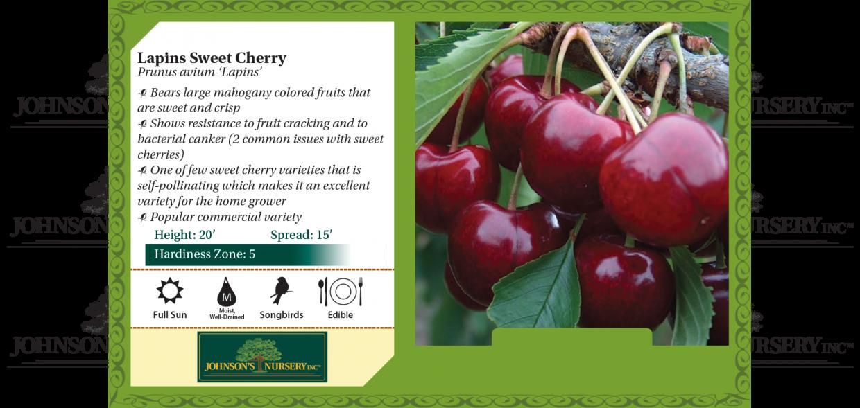 lapins sweet cherry prunus avium benchcard